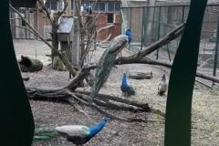 Zooloģiskajā dārzā